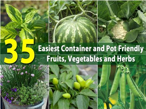 The 35 Easiest Container and Pot Friendly Fruits
