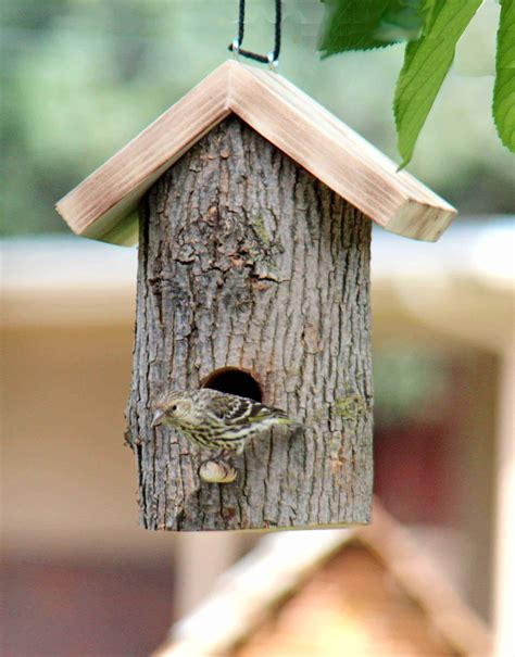 Window and Log Bird Houses and Feeders - Forest Street Designs