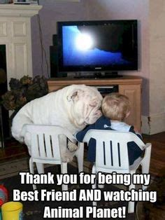 23 Great Bulldog Meme's To Zone Out On - Bullie Post