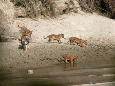 Western Nepal Wilderness Tour   Attentive Holiday Tours