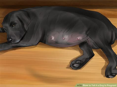 4 Simple Ways to Tell If a Dog Is Pregnant - wikiHow