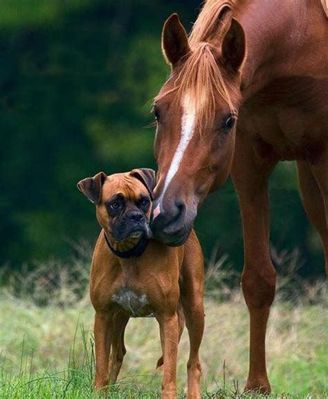 9 Reasons Why Horses and Dogs Will be Besties Forever