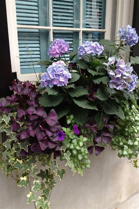 29 Ways to Grow Hydrangeas in Containers - Gardening Viral