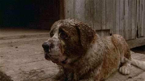 The Horror Digest: Cujo: Or, That Time I Rescued the