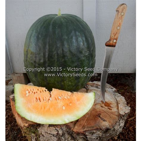 Mabry's Yellow Watermelon Seed - Heirloom, Open-Pollinated